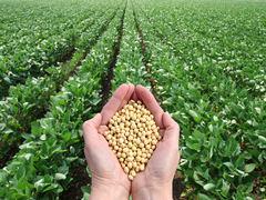 Telefónica y la FAO impulsarán iniciativas de digitalización para el sector agrícola