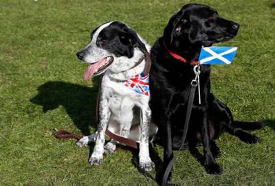 Escocia ya es ciberindependiente