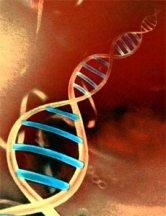 Sony lanzará un servicio para analizar el genoma humano